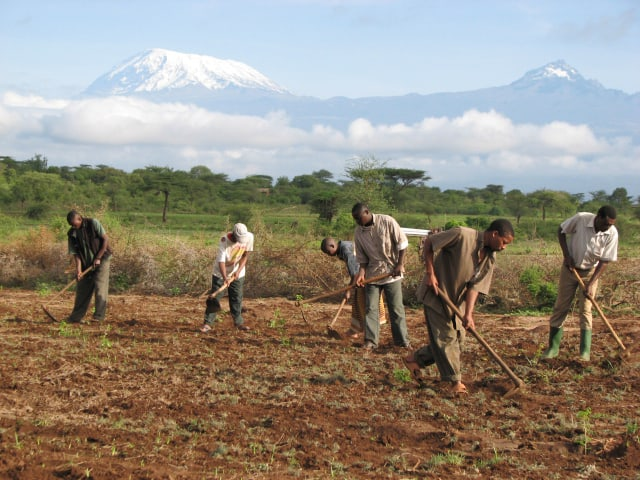 Tree planters at Makuyuni clear land for future site of mpingo plantation. Mt. Kilimanjaro and Mawenzi are seen in the background.