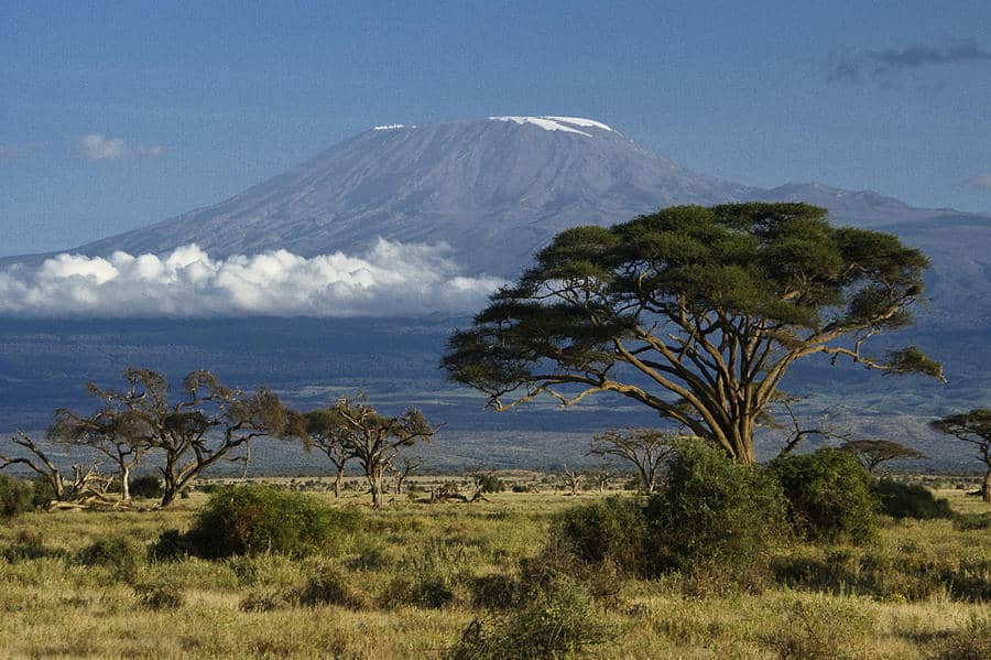 Kili and Trees