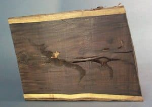 """Half-section of mpingo log 9"""" (23 cm) in diameter and 12"""" (30.5 cm) in length. This cut through the center of the log shows some of the heart checks, shakes and other defects which are common in mpingo."""