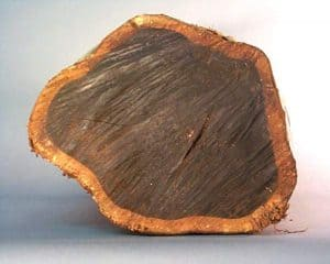 "Endgrain view of another log section of mpingo with few heart defects showing the irregular shape in which it grows. This size log is considered large compared to most mpingo harvested. Diameter is about 8 1/2"" x 11"" (21 cm x 28cm). Log is 11"" long and weighs 56 lb. (25.5 kg)."