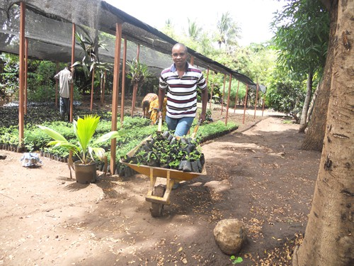 Loading tree seedlings at the ABCP nursery for transport to planting site.