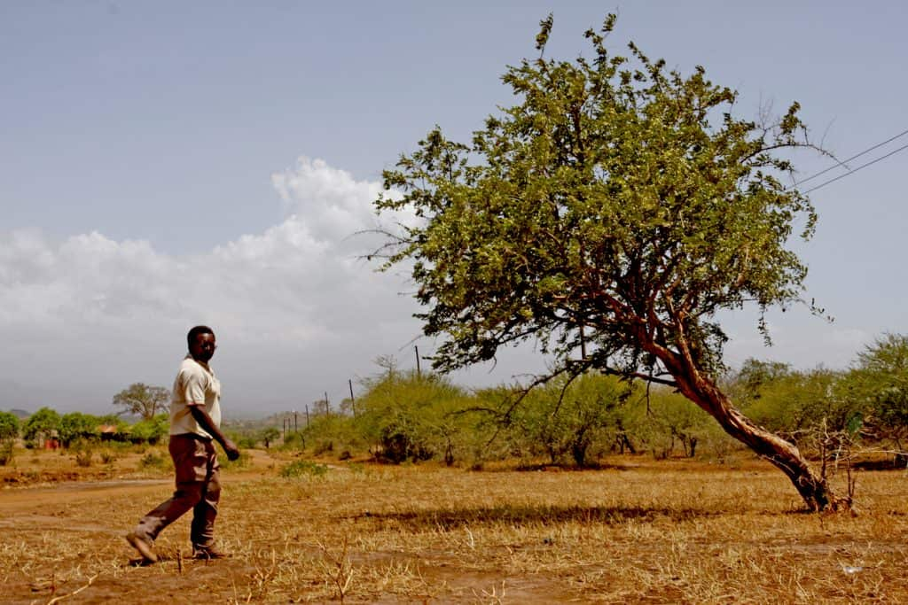 Sebastian Chuwa and mpingo tree