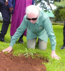 Jane Goodall plants mpingo seedling from ABCP nursery at Mweka Wildlife College in Moshi.